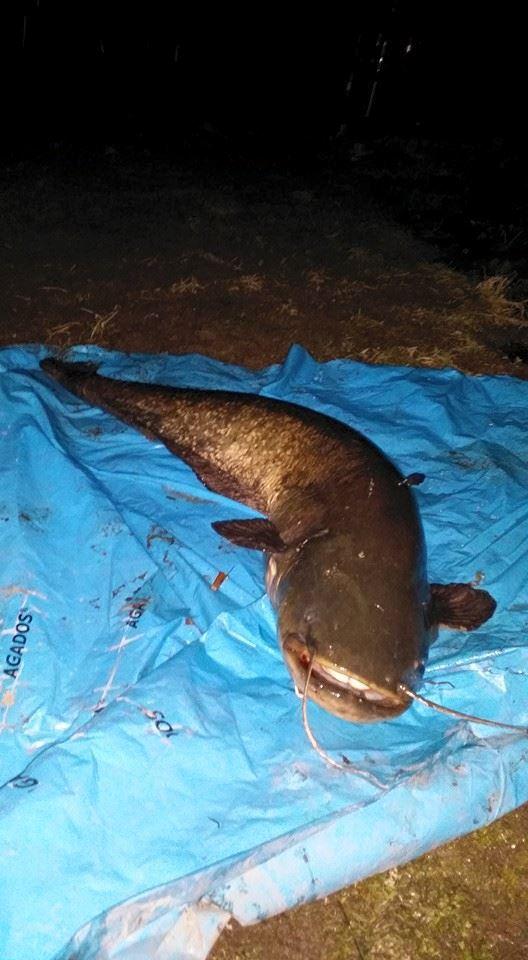 5.4. 015 Slíbené foto z noci na dnešek, lovci gratuluju!! 145 cm..